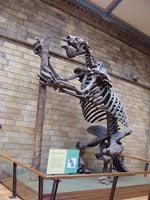 450px-Megatherium_americanum.001_-_Natural_History_Museum_of_London
